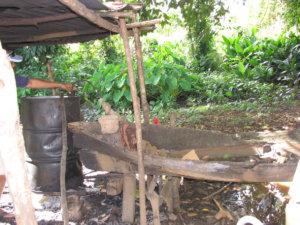 Pontikan paikallinen nimi on cususa ja tässä sitä tehdään.  Maissista ja sokerista valmistettu mäski lämmitetään tynnyrissä ja putkien lauhduttimena toimii vedellä täytetty vanha yhdestä puusta valmistettu kanootti.  Kuva Marshall Pointista.