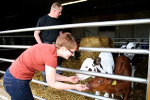 Uotilan tilalle jääville lehmävasikoille järjestetään mahdollisimman hyvät olosuhteet, koska niistä tulee jatkossa tärkeitä lypsylehmiä.