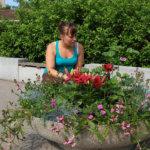 Kesän kukkaistutuksissa on pyritty näyttäviin kokonaisuuksiin