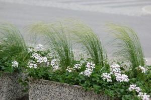 Erilaiset heinät ovat olleet istutuksissa suosiossa jo vuosia.