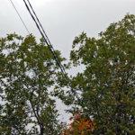 Sähkön muuntoaseman kytkinvika aiheutti erikoisia valokaaria – syynä sähkölinjalle kaatunut puu