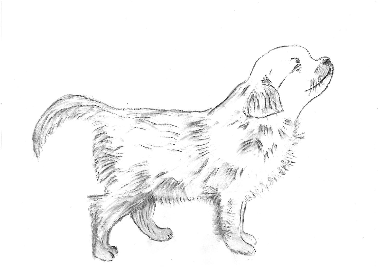 Koira Niiskuttaa