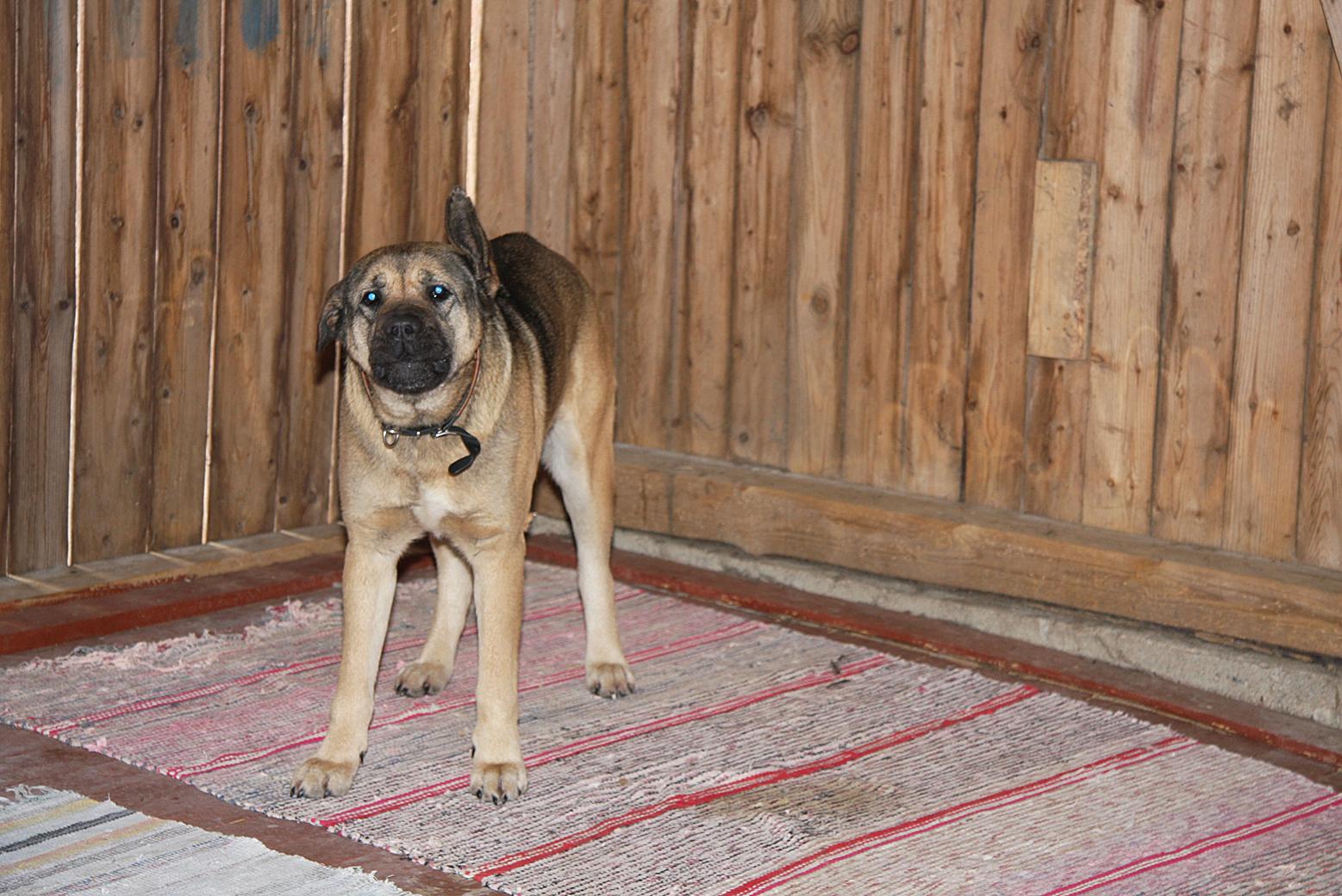 Arka Koira Rohkeammaksi