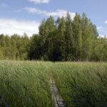 Kaupunki kunnosti Terisjärven luontopolun