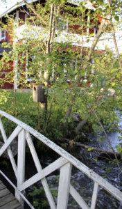 Kuuma kivi heitetään tänä vuonna Savikosken myllyn edessä olevalta sillalta