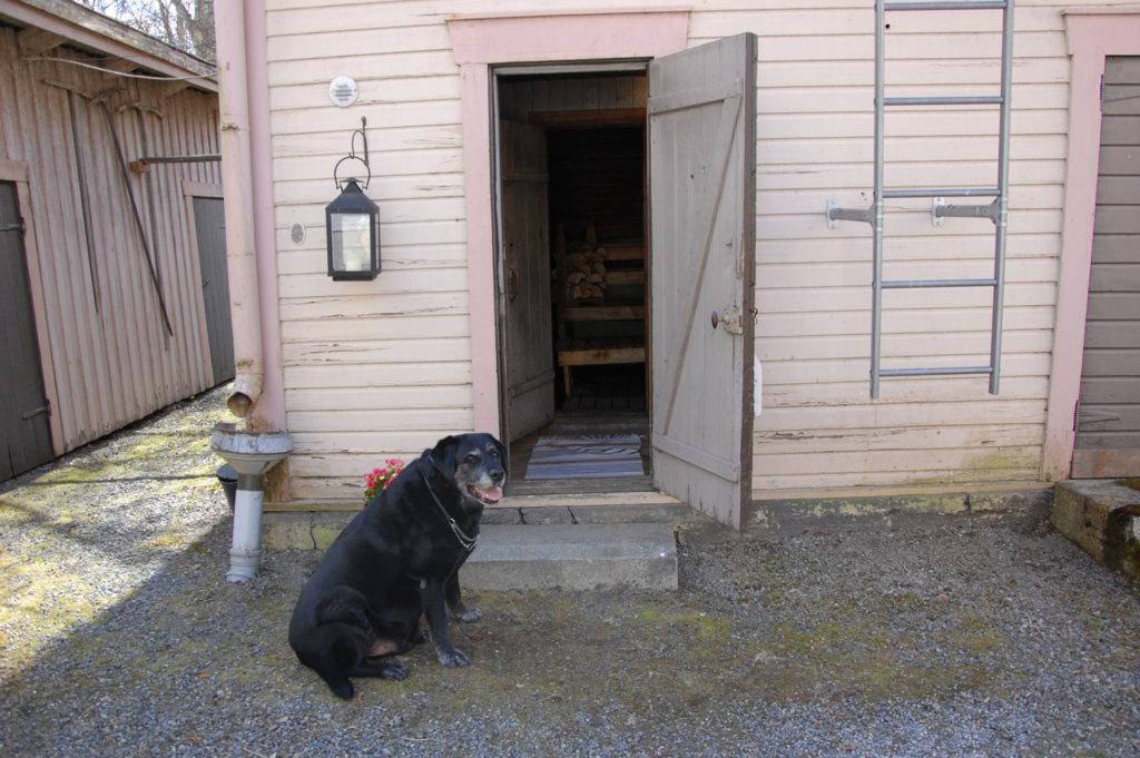 Satu Helinin koira Kampsu toivottaa saunojat tervetulleiksi.
