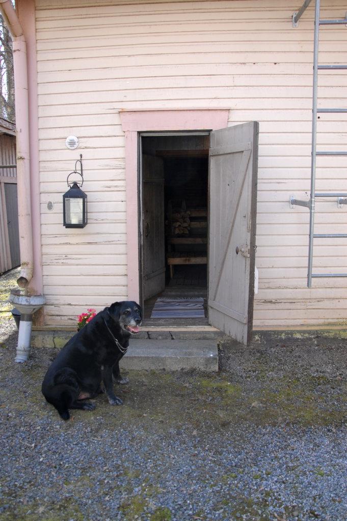 Tervetuloa saunaan, tuumii Satu Helinin koira Kampsu.