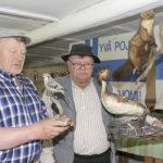 Täytetyt eläimet esittäytyvät Kinnarin kotimuseon kesänäyttelyssä