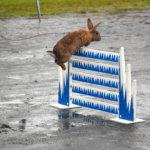 Kanit valtasivat Matinpuiston kentän
