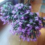 Marraskuun kukkaloistoa