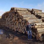 Pohjois-Euroopan suurin lehtipuusaha on tulossa Akaa Pointiin