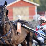 Birdland-hevosten tämän vuoden menestyjä on Bakels Birdland
