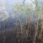 Kuivan maaperän vuoksi viimeaikaiset sateet eivät ole näkyneet vesistöissä – Vanajavesi pitää pintansa