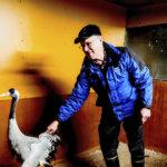 Ilmastonmuutos tuo vaikeuksia eläimille Suomessa – Kurkikuiskaaja Jouko Alhainen elättää siipirikkoja lintuja kotonaan