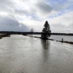 Tarpianjoki tulvii Mellolassa