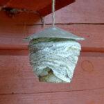 Erikoisia ampiaispesiä Varrasniemessä