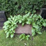 Seurakunta ei oikaise kallistuneita hautakiviä mutta saattaa tarvittaessa kaataa vaaraa aiheuttavat kivet – Hautamuistomerkin hoito ja turvallisuus on kuitenkin aina omaisten vastuulla