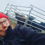 """Pedon karkottama lehmälauma karkasi kohti Viialan keskustaa – """"Voisivat keskittyä peurojen hätistelyyn"""""""