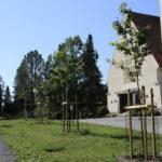 Viialan kirsikkapuiston taimet ovat helteissä kovilla, mutta puiston asiat ovat Viiala-Seuran mukaan kaiken kaikkiaan hyvällä mallilla – Tavoitteena on yhteensä 30 puun puisto