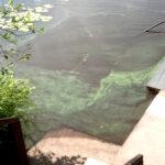 Jalantijärven vedessä epäillään olevan sinilevää – Uolevi Kallioniemi uumoilee sinilevästä jatkuvaa riesaa
